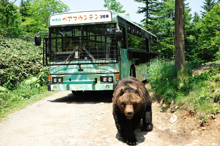 Brown bear and bus
