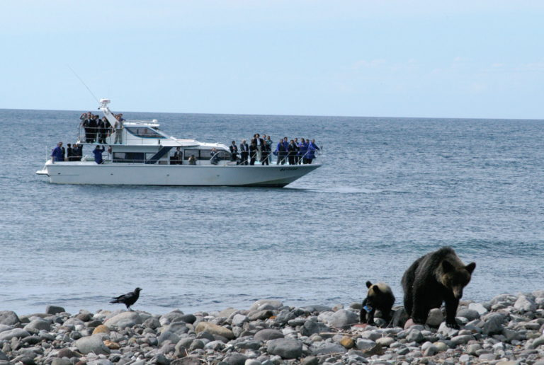 Bear-watching cruise
