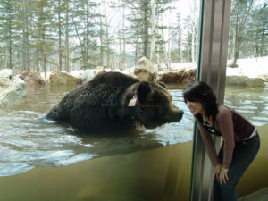 Bear through glass