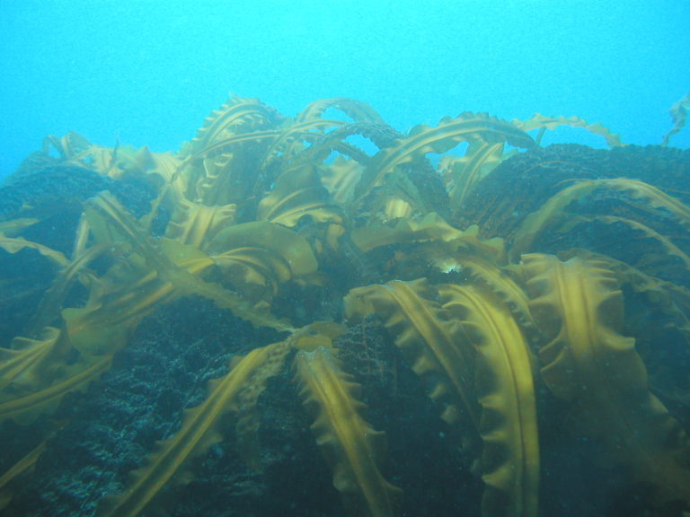 "An ""underwater forest"""
