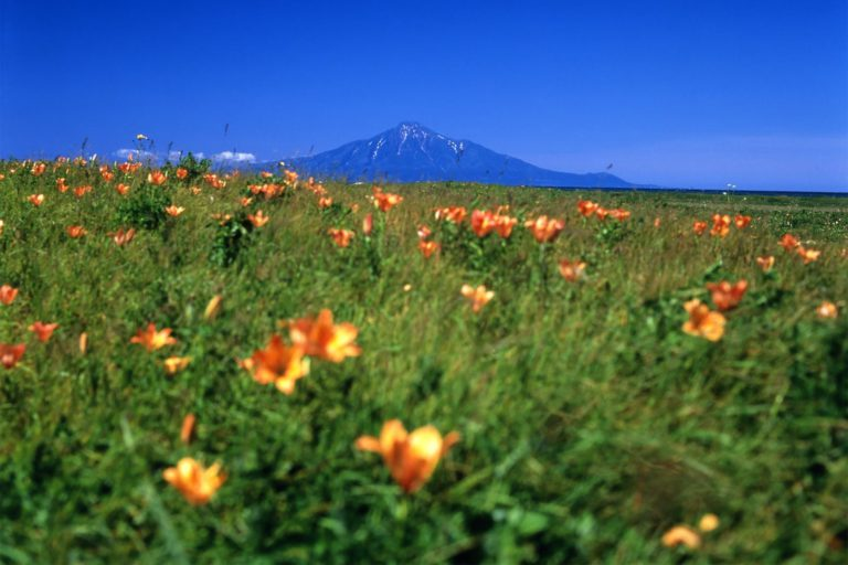 Flower trekking in Japan's northernmost national park