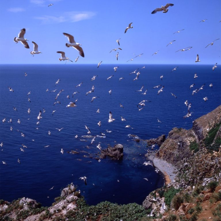 Watch the incredible seabird colonies on Teuri Island